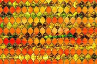 Sxrr 9011 Tangerine Stained Glass 500X375